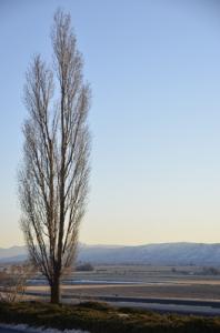 在爱德华州,黑脚山也叫黑脚山脉。(Annie Li)