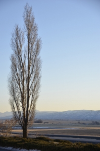 Blackfoot mountains, also known as or Blackfoot Range, in Idaho. (Annie Li)