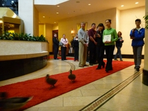 Our mission: accompany the Peabody Ducks on the red carpet for their daily parade from elevator to fountain.