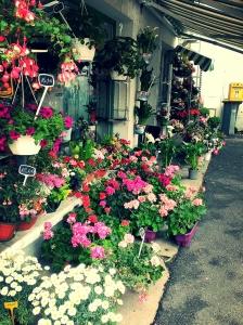 La vie en rose! Hãy dành thời gian để ngửi những bông hoa, một trong nhiều loài hoa lót đầy đường phố Paris.