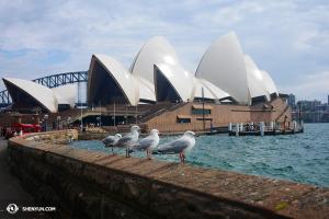 Ett besök i Sydneys Opera House och en stund av lugn och harmoni ... (Foto av dansaren Ben Chen)