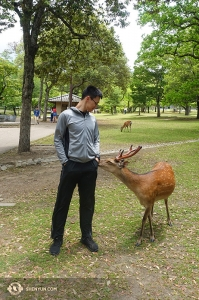 Dancer Daren Chou also made some new friends in a Japanese park.