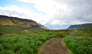 On the hike to see Iceland's second tallest waterfall, Glymur. (Photographic evidence that Iceland is not a land of ice.)