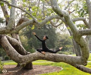 Гармонично вписываясь в изгибы деревьев рядом с театром Bridges Auditorium в Клермонте, танцовщица Лиз Лу нашла несколько минут, чтобы сфотографироваться перед началом одного из пяти запланированных концертов. (Автор фото – Стефани Го)