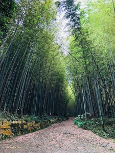 Not too far from Japan, Dancer Jeff Chuang takes a peaceful walk through a bamboo forest in Alishan, Taiwan...