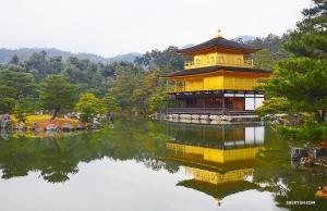 잔잔하고 거울 같은 연못가의 킨카쿠지(金閣寺). (Photo by Rui Suzuki)