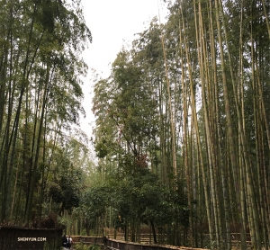 On its last day in Kyoto, Shen Yun World Company heads to Arashiyama Bamboo Forest. (Photo by dancer Betty Wang)