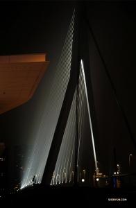 「Erasmusbrug」也被稱為「天鵝」,是鹿特丹的一座主要橋樑。(攝影:舞蹈演員馮岳超)