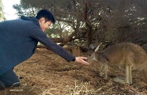 Performers enjoy meeting the locals wherever they go. Dancer Teo Yi says hello to a new friend at Kangaroo Island in Perth, Australia. (Photo by lighting engineer Benny Chan)