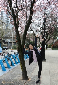 Principal Dancer Kaidi Wu mimics the beauty of this blossoming tree with her pose and scarf. (Photo by dancer Cecilia Wang)