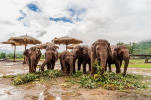 遠離城市的喧囂,她忘情於鄉野,近距離接觸友好的大象們。