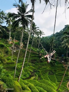 Diana Teng enjoying the thrill of Bali's incredible jungle swings.