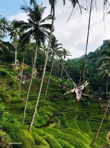 スリリングなバリ島のジャングル・ブランコを満喫するダイアナ・タン。