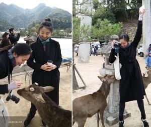Sur le chemin elles se font de nouveaux amis. Ces trois cerfs en liberté n'ont pas peur des touristes.