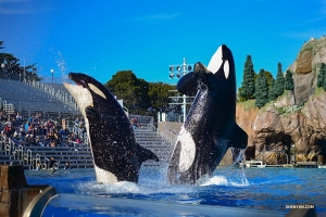 In San Diego, California, performers visit whales, dolphins, and penguins at Sea World.