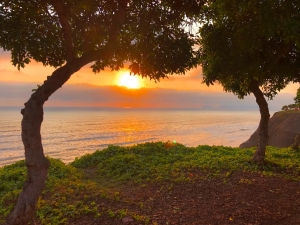 沐浴著夕陽的餘暉,兩棵巴西樹似乎在竊竊私語——你們在說什麼呢?(攝影:舞蹈演員Alvin Song)