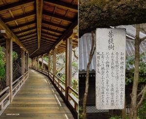 Härnäst är templet Eikan-do Zenrin-ji, inbäddat i Kyotos östra berg. (Foto: Felix Sun)