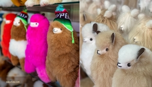 Stuffed Alpacas: a fluffy South American animal whose wool is softer than sheep's wool.