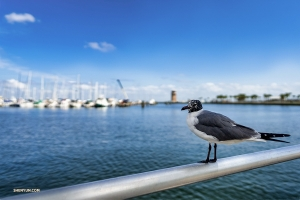 A local overlooking Tampa Bay. (Photo by Tony Xue)