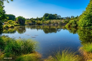 Next up, a visit to the Auckland Botanic Gardens, home to over 10,000 different plants, including rare New Zealand ones.