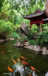 悉尼友誼花園是模仿明朝的建築風格修建的。(攝影:巫琨璟)