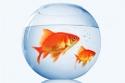 Fish Thumbnail
