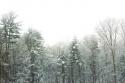 Winter Thumb